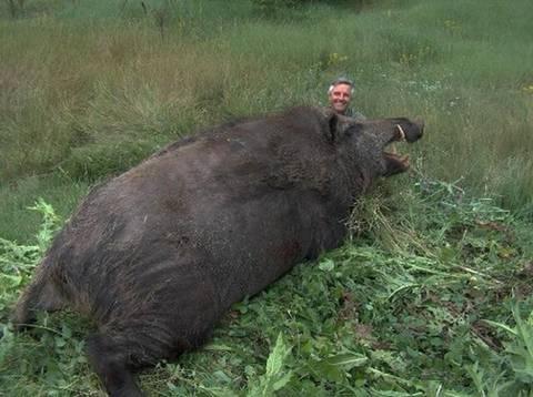 텍사스 멧돼지 수준 - 꾸르