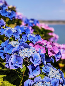 Flowers in the Cliff Garden at the Cliff House Hotel in Ardmore