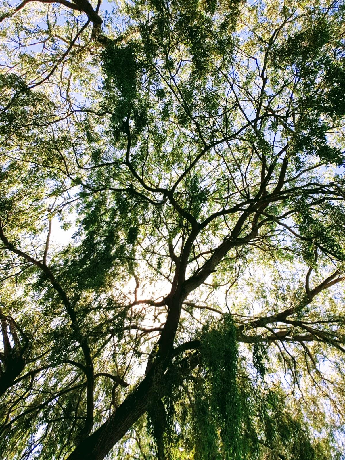 Look up at a tree
