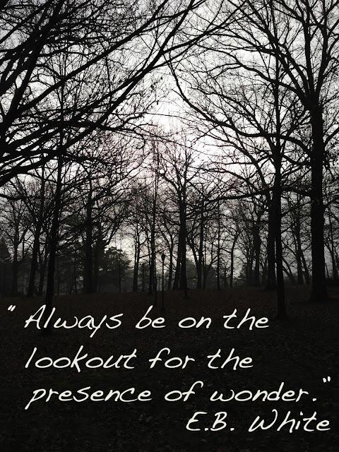 quotes, wonder, joy, E.B. White, Anne Butera, My Giant Strawberry