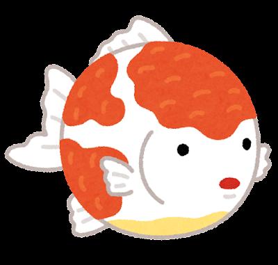 ピンポンパールのイラスト(金魚)