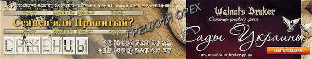 Привитый или сеянец грецкий орех от Сады Украины