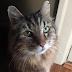 Nutmeg: Ο γηραιότερος γάτος του κόσμου έγινε 31 χρονών (photos)