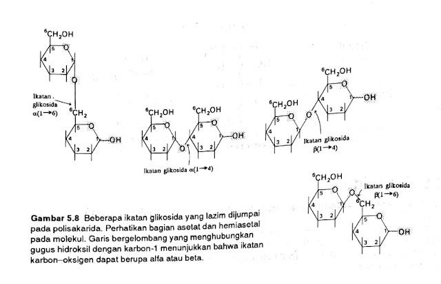 Belajar Memgenal Ikatan Glikosida