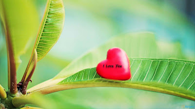 cute-love-green-leaves-wallpapers
