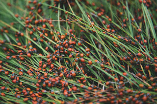 Green, grassy stalks with tons of ladybugs all over them. Photo by Austin Ban on Unsplash.