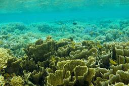 Kepulauan Balabalagan Pesona Surga Bawah laut Borneo