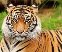 7 Contoh Fauna Karnivora serta Ciri-cirinya Lengkap