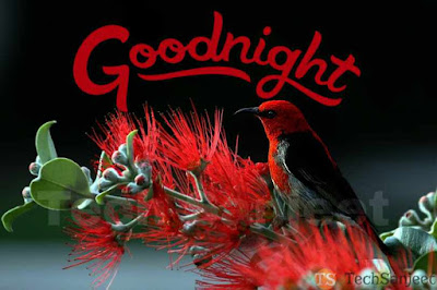 good nyt images