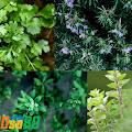 Beberapa Jenis Tanaman Herbal yang Mudah Dirawat