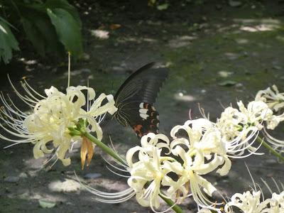 宝戒寺のヒガンバナ