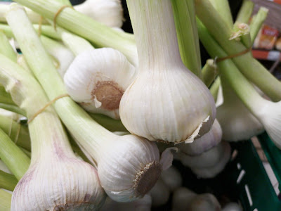 "alt=""Young White Garlic Picture"""