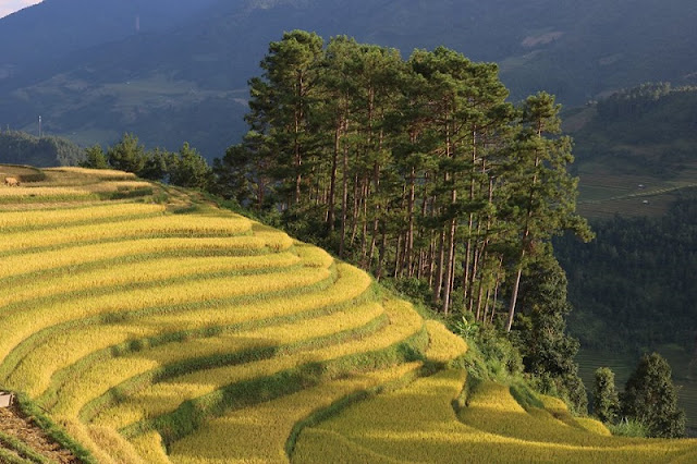 Amazing 4-day holiday in Sapa & Mu Cang Chai 2