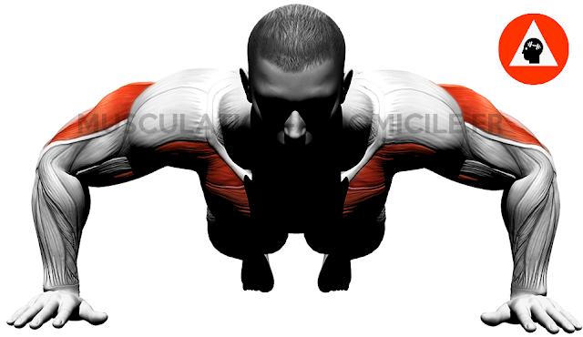 musculation-à-domicile.fr méthode poids de corps et haltère homme pompes face logo