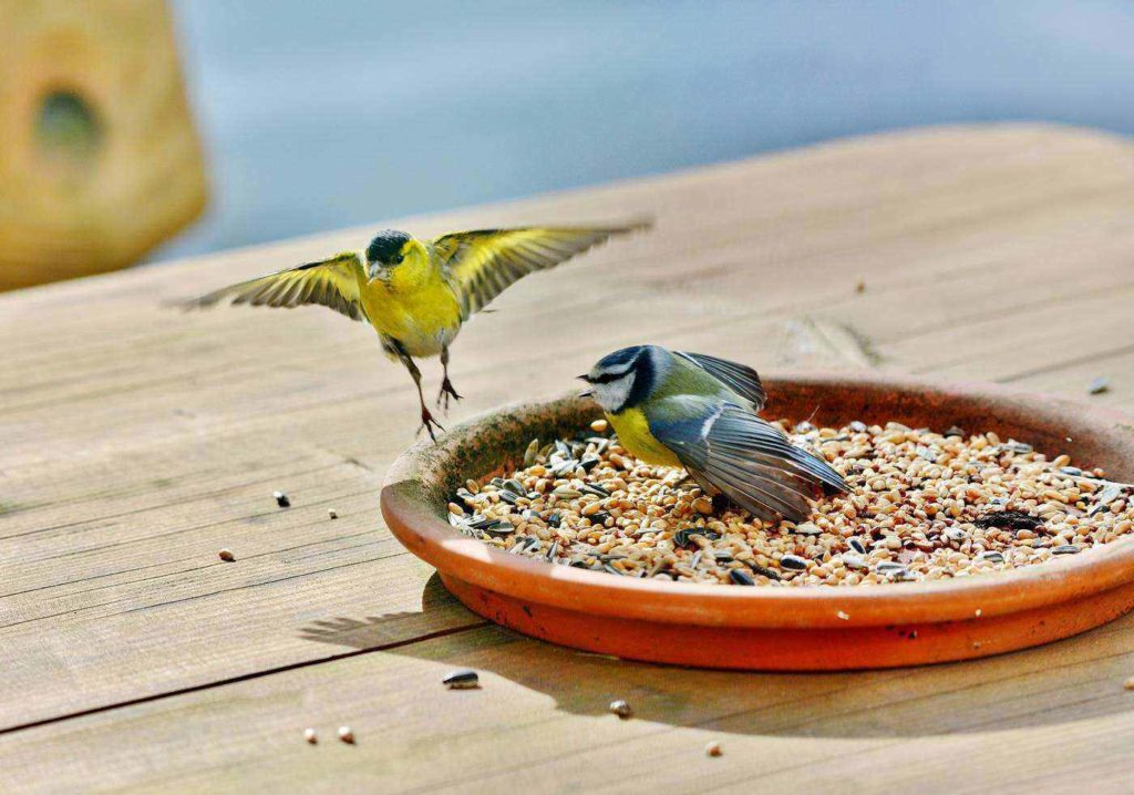 A Detailed Review of the 7 Best Wild Bird Foods for Your Yard