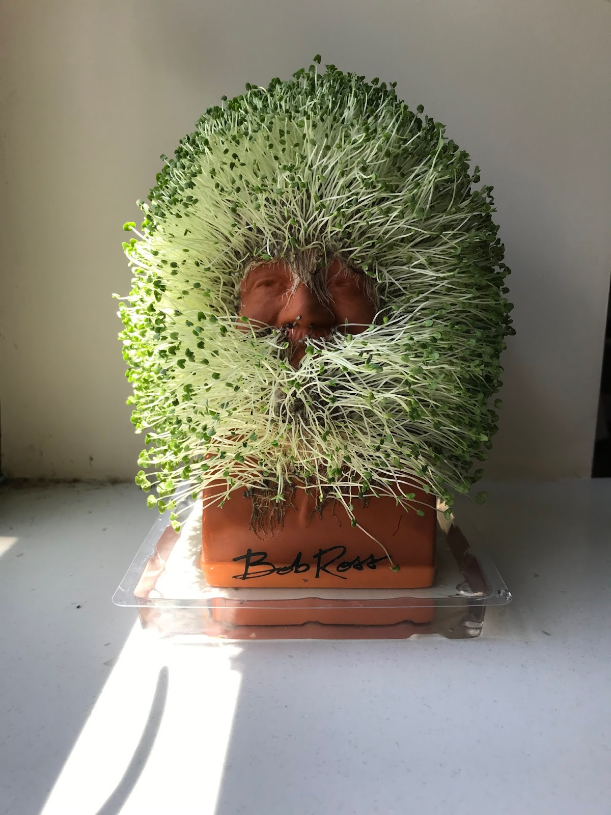 Musket Media 2018 07 First Chia Pet