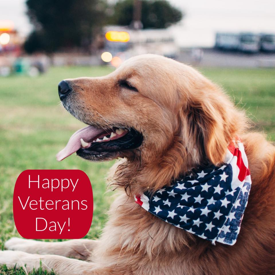 National Pets for Veterans Day Wishes For Facebook