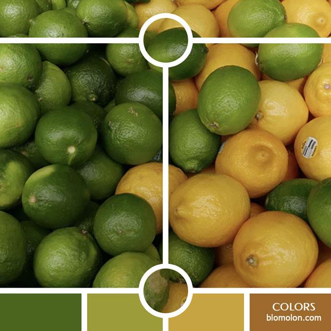 variedad_en_color_color_33