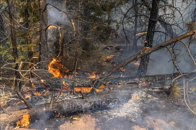 Burnt trees during the Bootleg Fire in Bly, Oregon, USA, July 17, 2021. Photo AFP