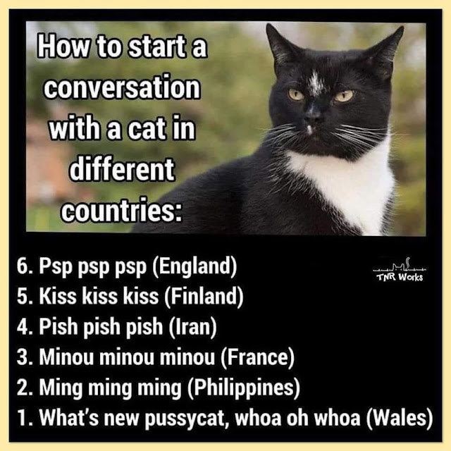 How to start a conversation with a cat in different countries
