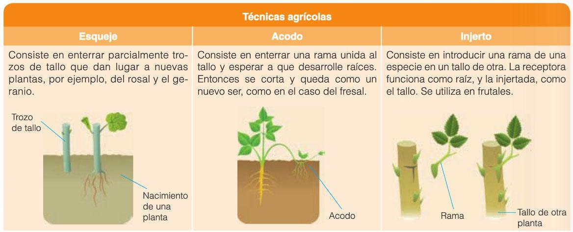 Estaca reproduccion asexual plantas carnivoras