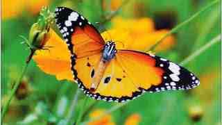 एक शिक्षाप्रद कहानी - तितली का संघर्ष | Inspirational Story In Hindi | Gyansagar ( ज्ञानसागर )