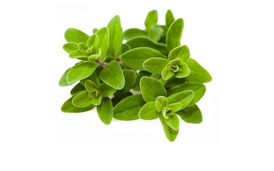 Benefits of marjoram.. for women and hair