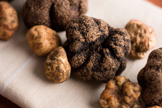 how to grow truffles in canada