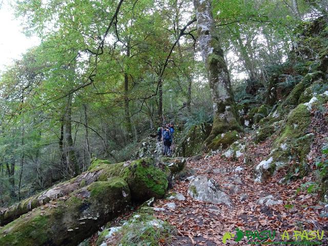 Peña Sienra desde Covadonga: Boque subiendo a la Vega de Orandi