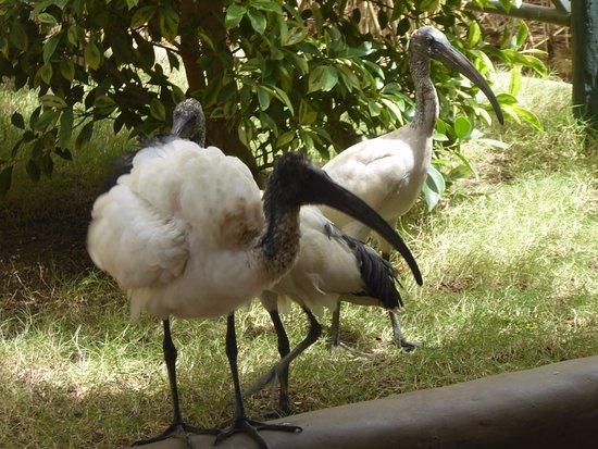 LE PARC EXOTIQUE DE NGUERIGNE : Parc, animaux, visite, tourisme, sauvage, oiseaux, LEUKSENEGAL, Dakar, Sénégal, Afrique