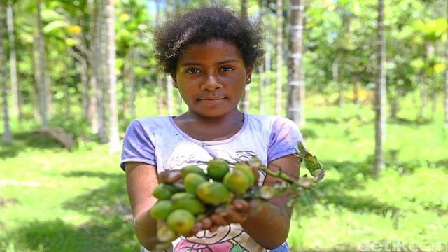 Buah Pinang Papua