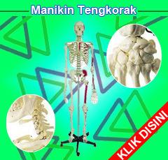 Manekin Tulang, Manikin Kerangka, Boneka Tulang Rangka, Model Rangka Manusia, Torso Tulang Rangka