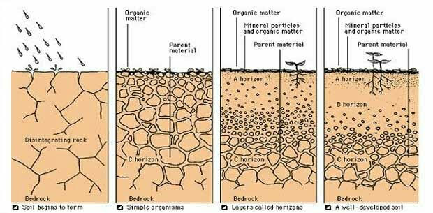 Soil Formation its stages and types