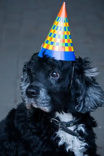 How do you know the real age of dogs and how many years can they live?