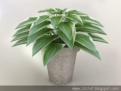 pot plant 3d model free