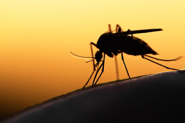 Battle against Malaria Needs To Be Intensified