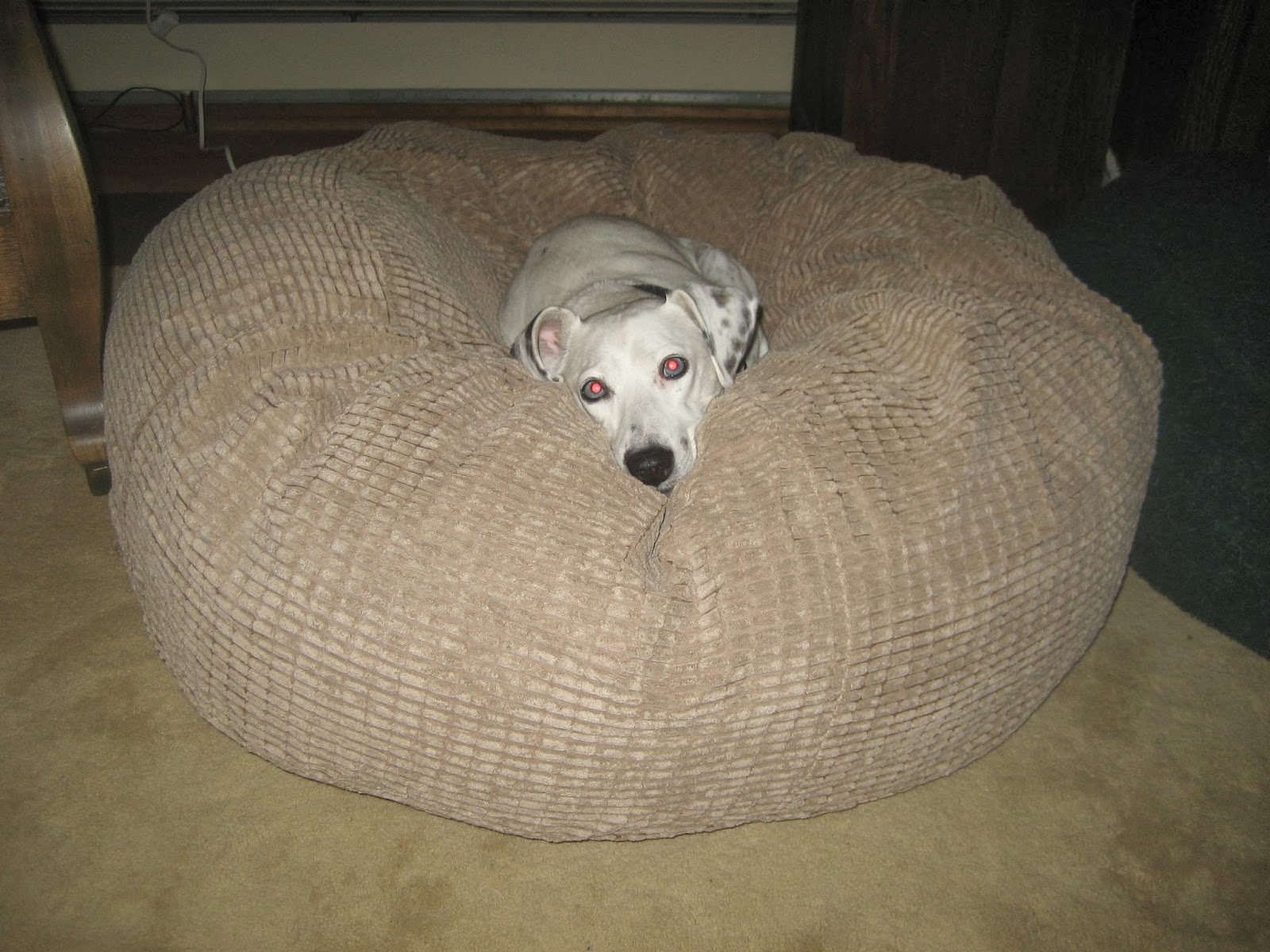deaf dogs and benevolent gnomes new dog bed
