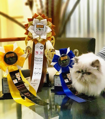 A beautiful cat with three cat show award ribbon during Meowcon 2019