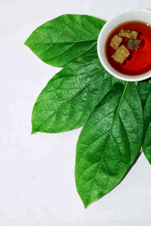 Tumbuhan ini kaya dengan kandungan kimia yang telah diketahui Manfaat Buah Alpukat Dan Daun Alpukat Bagi Kesehatan