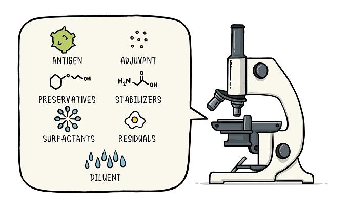 Vaccine Ingredients: Antigen, Adjuvant, Preservatives, Stabilizers, Surfactants, Residuals, Diluent.