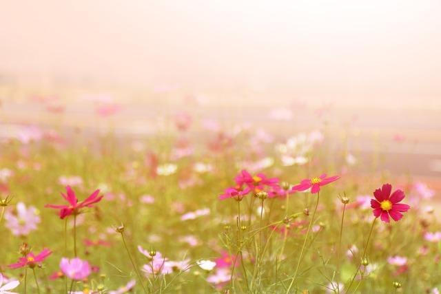 Bunga-bunga di Pulau Jeju