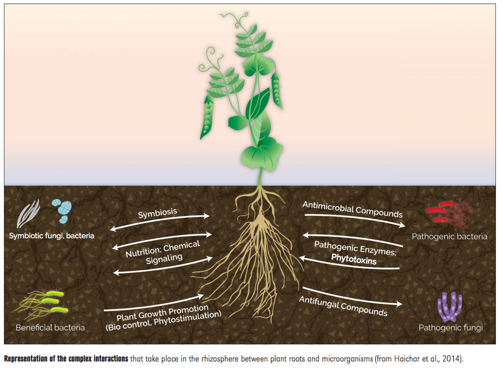 managing plant nutrients international year of soils