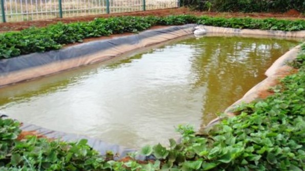 """Fish farming campaign is an initiative by the Kenyan Department of Agriculture, livestock, and fisheries. It is running the """"Eat more fish campaign"""