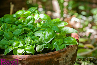 THESE HEALTHY HERBS ARE A MUST HAVE AT HOME 31