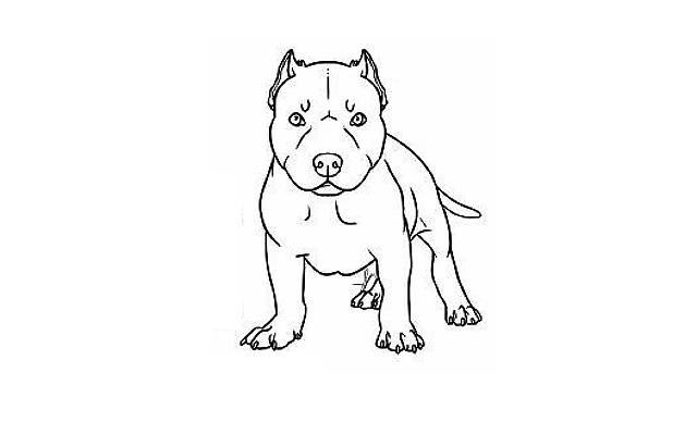 dibujos faciles de perros pitbull