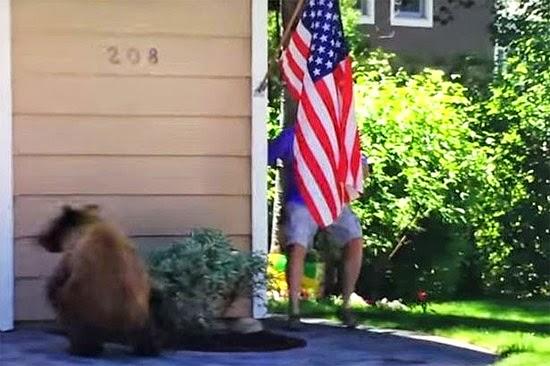 Encontro surpresa de um urso e um homem
