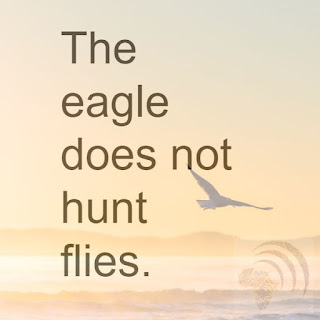 The eagle does not hunt flies. African proverb lesson.