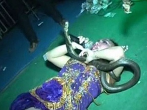 Penyanyi Dangdut Maut Dipentas Setelah Dipatuk King Cobra