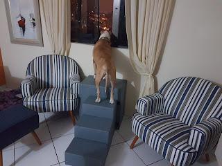 cães olhando pela janela