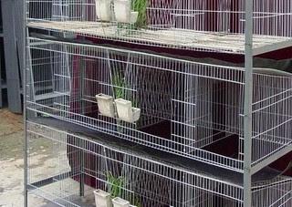 kandan ternak kelinci